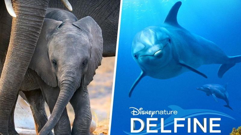 Disneynature Elefanten und Delfine